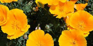 Srinagar - Nishat garden flowers