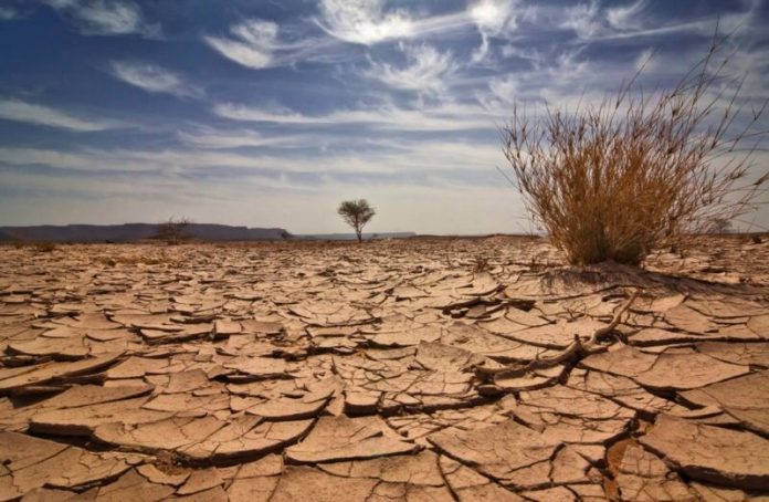 UN: Land degradation affects some 3.2 billion people