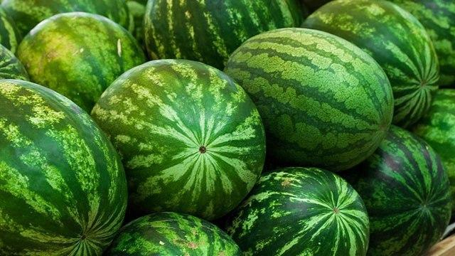 Uzbekistan exports more than 2 thousand tons of watermelons