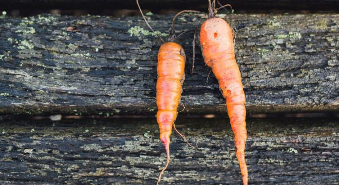 FROM THE FIELD: Ugly veggies in Kenya destined for lunch not landfills