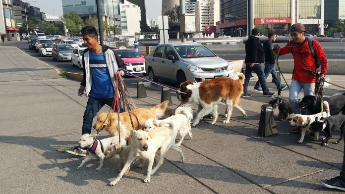 Mexico's feat against rabies through cross-sectoral collaboration is possible in other countries