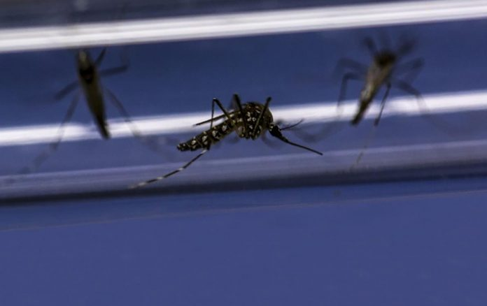 Dengue control: three-year Indonesia trial shows promising results