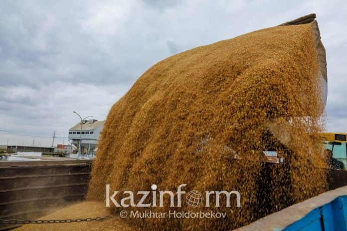 Kazakhstan to export grain to 40 states of world