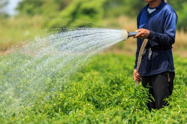 FAO boosts Iranian experts' knowledge of agricultural water saving, productivity