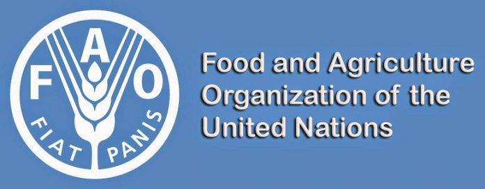 Jordan's agriculture minister, FAO representative discuss food security cooperation