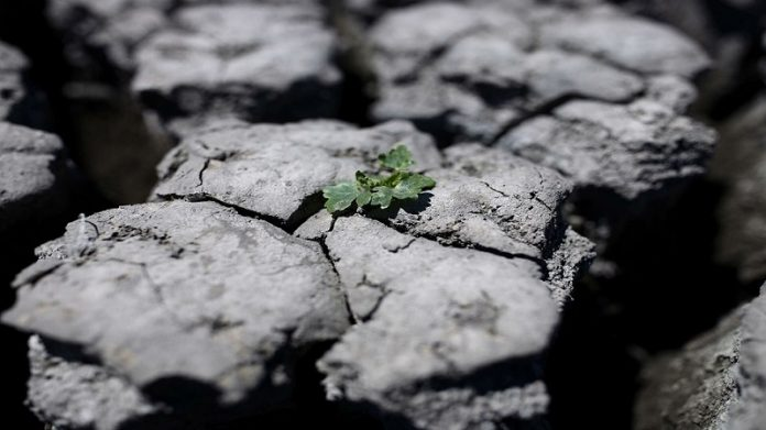 2C warming would release billions of tons of soil carbon: Research