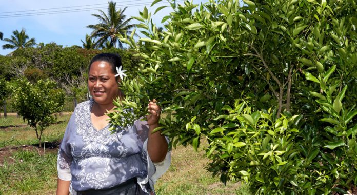 FROM THE FIELD: COVID crisis creates new wave of self-reliance for Tonga