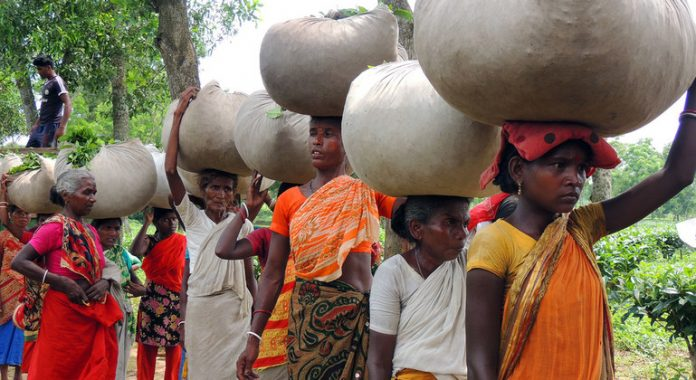 Exploited and marginalized, Bangladeshi tea workers speak up for their rights
