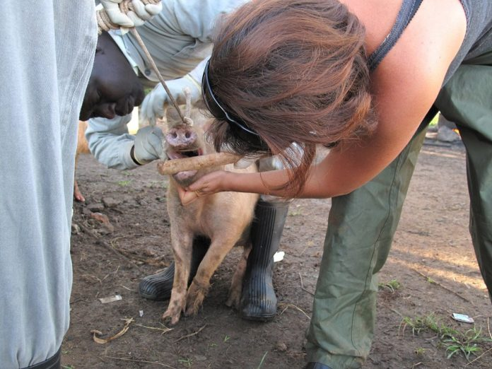 New international expert panel to address the emergence and spread of zoonotic diseases