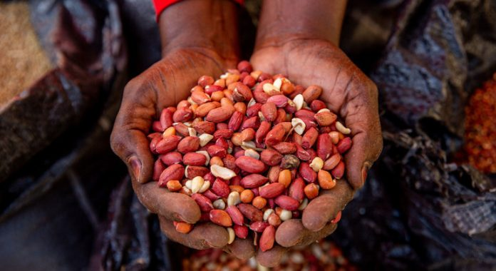 FROM THE FIELD: 4.4 million Nigerians facing 'catastrophic food conditions'